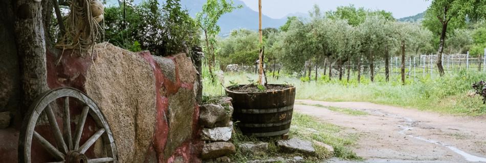 ORGOSA: la lunga strada che porta al Cannonau